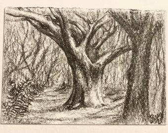 "ACEO art Trees - Original Pencil Drawing ""Live Oak"" forest scene"