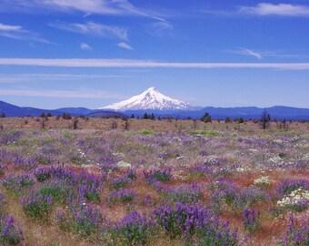 Mt Hood Mountain Photography, Oregon Landscape, MtHood Portland Wall Art, Portland Decor, Cascade Mountains, Mountain Range, Wildflowers