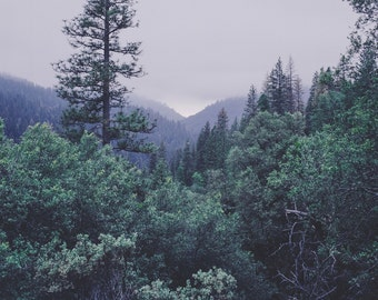 California Forest Photography, Fine Art Print, Sierra Nevadas, Nature Photography, Forest Decor, Dreamy Scene, Surrealist Photography