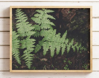 Fern Print, Nature Photography, Botanical Decor, Garden Theme Home, Green Photography, Detailed Nature, Ferns, California Photography