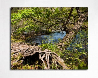 Nature Photography, Swamp Tree, Mississippi Photo, Forest Print, Fairy Forest, Outdoors, Hiking Photography, Tree Roots, Gnarled Tree