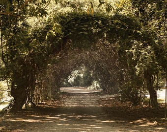Tree Tunnel Rustic Landscape Photography Wall Art Fine Louisiana Nature Print Wisteria Country Lane