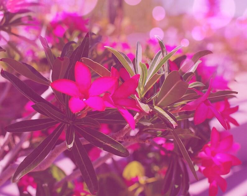 Desert Flower Print Desert Rose Flower Arizona Nature Etsy