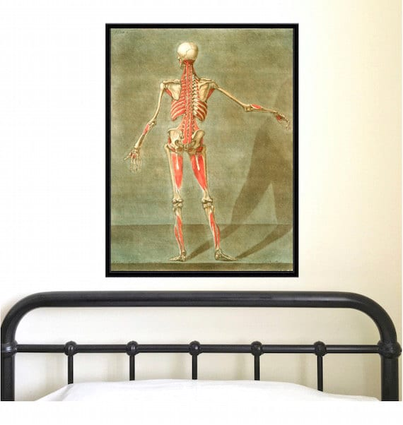 Anatomical Study Of Human Body Back Antique Reproduction Etsy