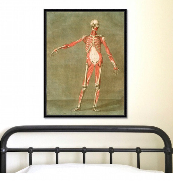 Anatomical Study Of Human Body Front Antique Reproduction Etsy