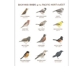 Backyard Birds of the Pacific Northwest Art Print / Washington State Art / Birds Art / Pacific Northwest Art / Gifts for Him / Birds