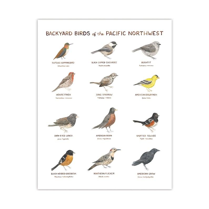 Backyard Birds of the Pacific Northwest Art Print ...