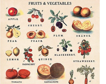 Fruits and Vegetables Wrapping Paper by Cavallini to Frame or Wrapping, Book Binding, Decoupage, Collage, Scrapbooking, Paper Arts PSS 3424
