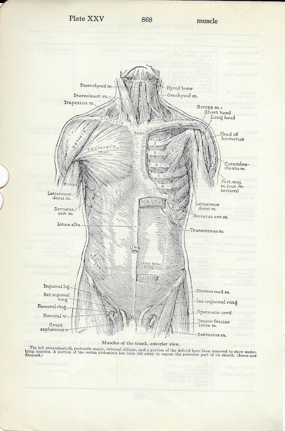 Human Anatomy Vintage Medical Dictionary Illustration Anterior