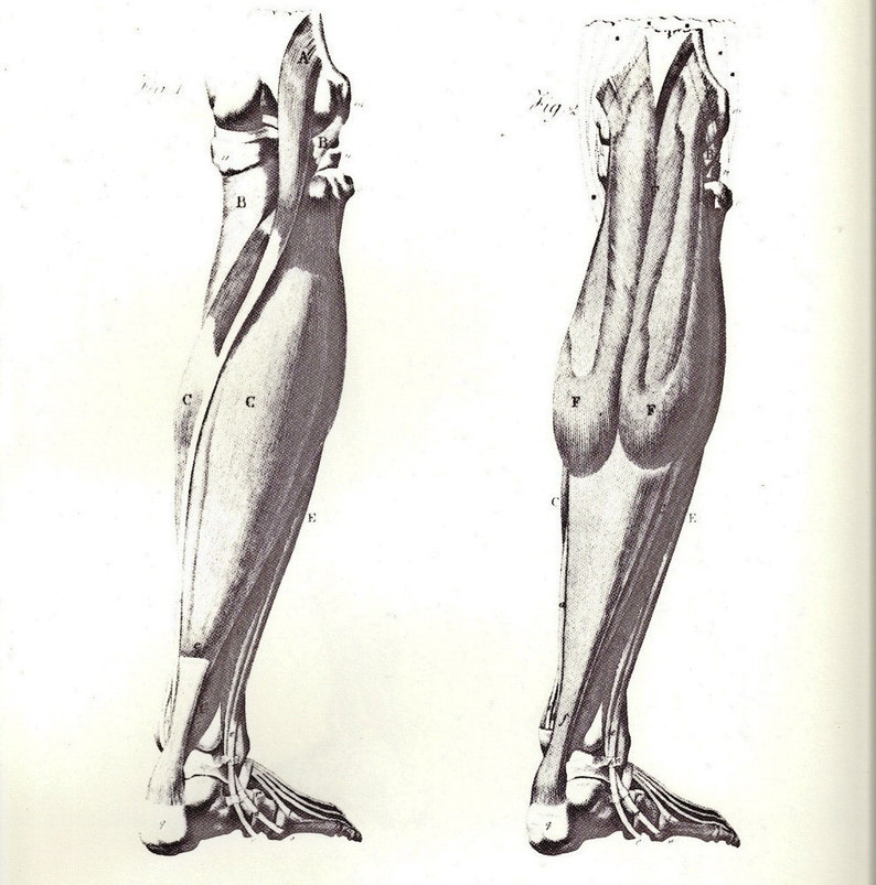 Human Anatomy Muscles Of The Lower Leg Foot Muscles By Etsy