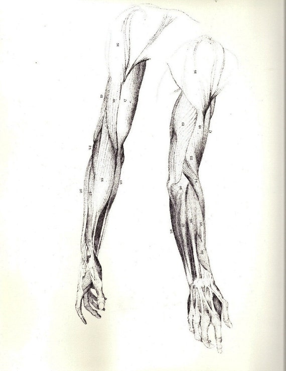 Menschliche Anatomie Arm Muskeln antike Illustration von John | Etsy