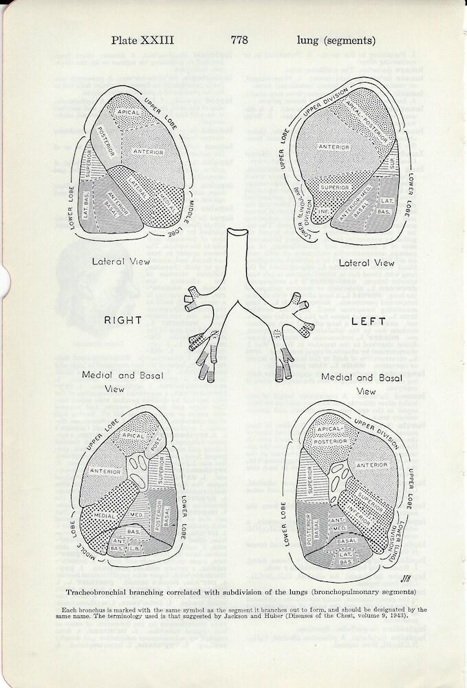 Menschliche Anatomie Jahrgang medizinische Anatomie Lunge | Etsy
