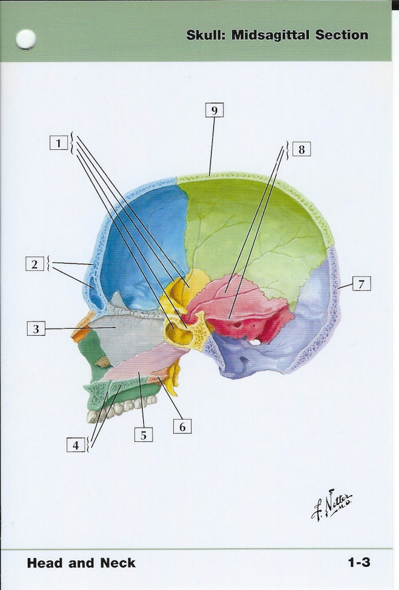 Skull Midsagittasl Section View Anatomy Flash Card by Frank H  Netter to  Frame or for Paper Arts, Collage Scrapbooking and MORE PSS 2726