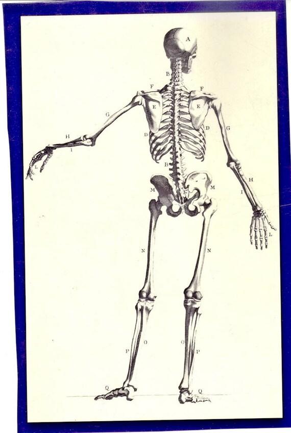 Menschliche Anatomie Skelett von der Rückseite Abbildung von