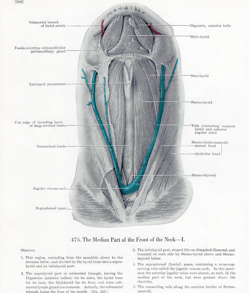Vista frontal del platisma y frente mediana del cuello en el reverso ...