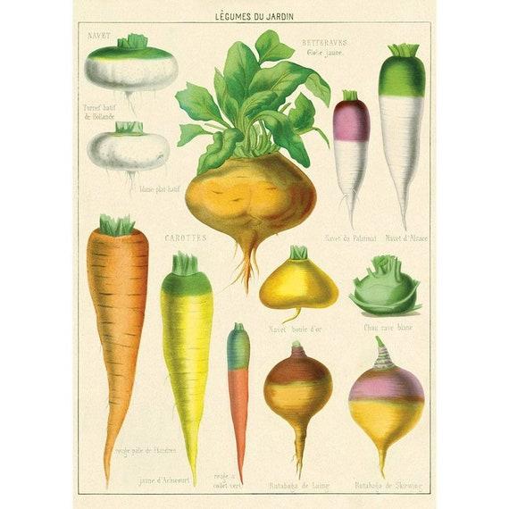 Cavallini /& Co Le Jardin Decorative Paper Sheet 20x28