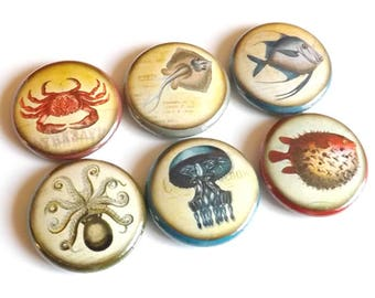 Fish Ocean Sea refrigerator button magnets nautical jellyfish puffer octopus gift party favors stocking stuffer pins beach rustic home decor