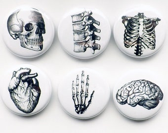 Human Anatomy flair Magnet Button Pin Badges Coaster teacher gifts brain skull science anatomical heart geekery stocking stuffer party goth