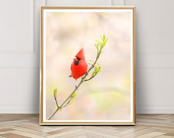 Male Northern Cardinal Photo - Digital Download - Instant Download - Printable Photography - Bird Photo