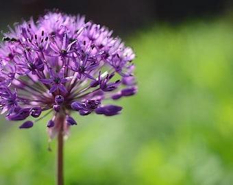 Lilac Fragrance Oil - 1 pound