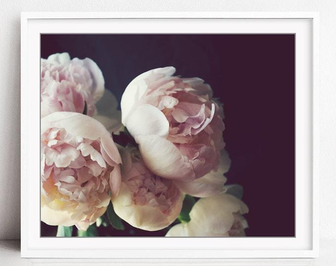 Peony Wall Art - Flower Still Life Photography Dark Floral Botanical Print Pale Pink - Peony Three