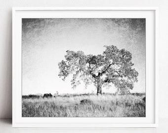 Oak Tree Photograph, Black and White Wall Art, Landscape Photography, Tree Wall Art, Nature Photography, Gray Nature Wall Art - Faded Oak