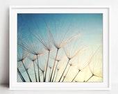Dandelion Print, Botanica...
