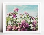 Roses Photograph, Botanic...
