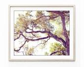 California Oak Tree Wall ...