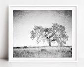 Oak Tree Photograph, Blac...