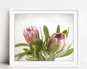 Protea Flower Photography...