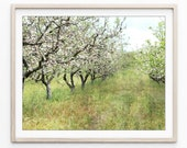 Landscape Photograph, Fru...