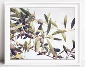 Olive Branch Botanical Pr...