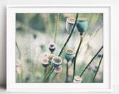 Poppy Pods Print, Rustic ...