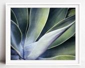 Botanical photography - a...