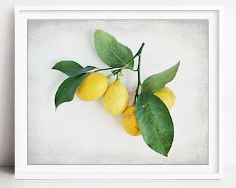 Lemon Still Life Print - Food Photography - Farmhouse Kitchen Wall Art - Fruit Print - Meyer Lemons - Dining Room Decor, Lemon Branch