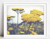 Yarrow Flowers Wall Art, ...