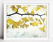 Ginkgo Tree Leaves, Botan...