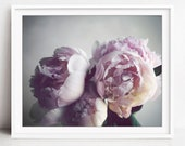 Peony Photography, Flower...