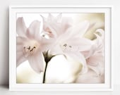 Flower Photography - Pale...