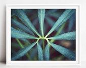 Green Botanical, Hellebor...