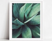 Botanical Photography, Gr...