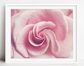 Pink Rose Botanical Print...