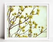 Botanical Print - Dogwood...