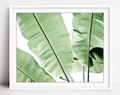 Botanical photography - P...