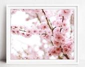Cherry Blossoms Print, Pi...