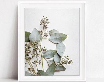 Eucalyptus botanical print, nature photography, sage green wall art print, nature botanical art, white wall art - Eucalyptus Sprig Six