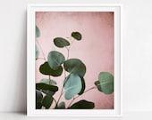 Eucalyptus Leaves Print, ...
