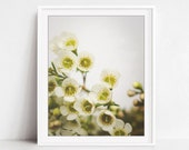 Flower Photography, White...