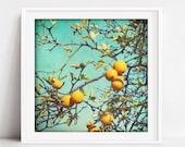 Orange Fruit Tree Print, ...